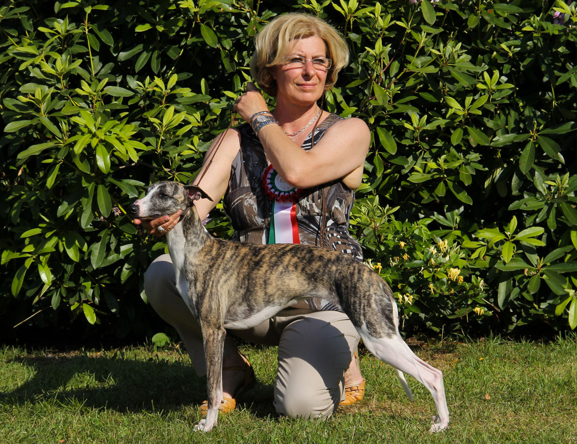 whippet_Jamaica_01